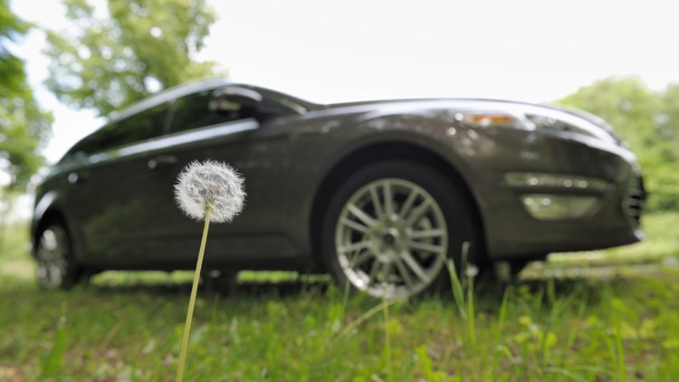 Ford and dandelions