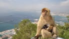 Naughty Monkeys Banished To Scotland
