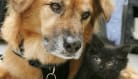 Dog Gets Job As Kitten Nanny