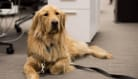 10 Great Places to Work if You Love Dogs