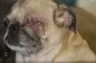 Vet Removes Dog's Eye Without Owner's Consent