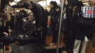 Video: Rat Terrorizes Commuters on NYC Subway