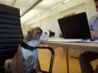 Ask Jack: Dogs at Work, E-Mail on Résumés and Job of the Week