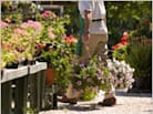 Confessions: Sowing a Career in a Garden Department