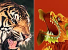 Are You a Dragon (Yin) or a Tiger (Yang)?