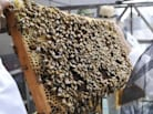 Trucker Rethinks Next Haul After Crash With Bees