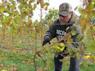 Wine Industry Succeeds In Recession-Weary Michigan