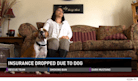 Homeowner Susie Salazar Loses Insurance Policy Over Pit Bull