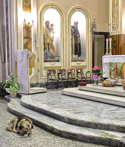 http://www.pawnation.com/2013/01/16/italy-dog-frequent-churchgoer-since-owner-died/