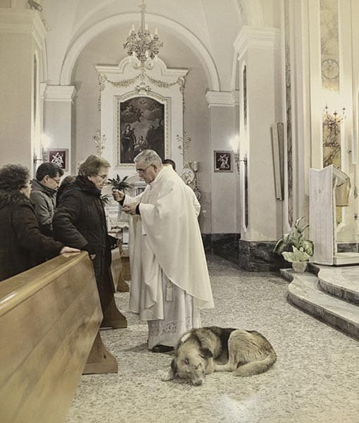 http://www.pawnation.com/2013/01/16/italy-dog-frequent-churchgoer-since-owner-died/3