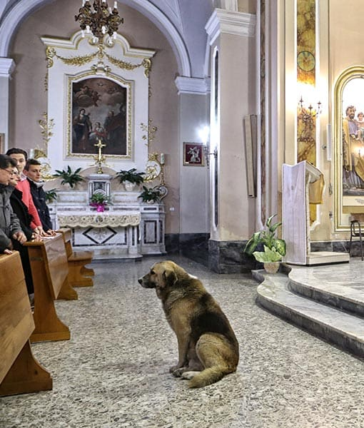 http://www.pawnation.com/2013/01/16/italy-dog-frequent-churchgoer-since-owner-died/2