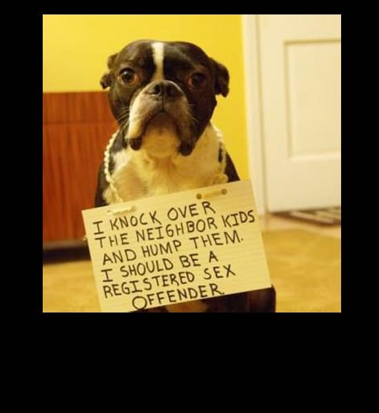 dog shame hump kids the best my fave meme funny pics gifs cool stuff funny pics amazing cool stuff  Laugh to ya shart (33 weekly best pics)