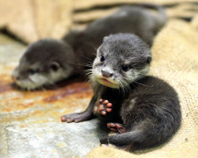 Very cute photos of otters