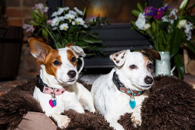 UK's top ten dog-friendly inns