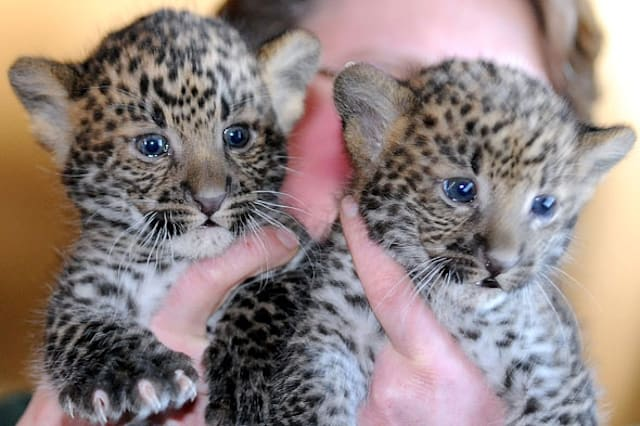 Baby zoo animals around the world
