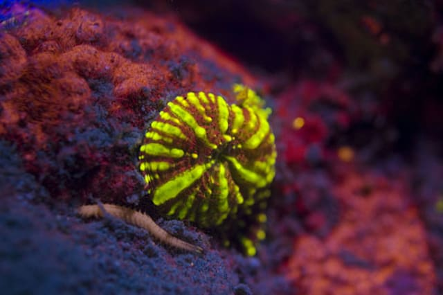 Amazing pics: Red Sea coral reef