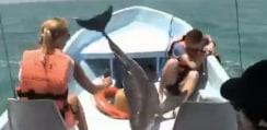 ワンパクすぎだろ!元気なイルカが飛びすぎて大変なことにwww【動画】