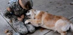 兵役から戻ってきた飼い主とワンコの再会が感動的すぎる【動画】