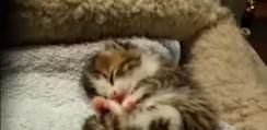 すやすや眠る生まれたての子ニャンコ→むにゃむにゃ言って可愛すぎな展開へ!【動画】