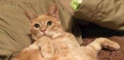 「暑いのは苦手だニャー」 愛猫家で有名なMLB選手、移籍先が暑すぎて巨漢の飼い猫と離れることに・・・ファンから悲しみの声殺到