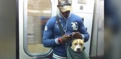 筋トレ!? 大型犬をバッグに入れて持ち運ぶNYのマッチョガイたち