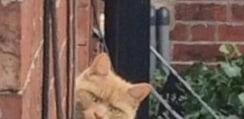視線を感じて窓の外を見たらネコが睨んでた!絶妙な表情で隣人にキレるニャンコがネット上で話題に
