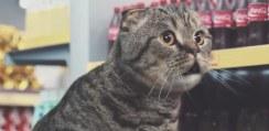 ネットでバズったネコ動画を詰め込んだCMがシュールすぎるwww【動画】