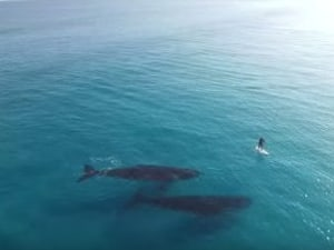Paddleboarding With Whales In Australia