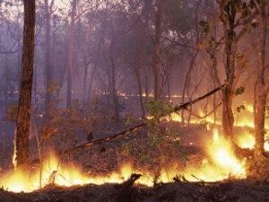 Two Dead, Fears For Third In South Australian Bushfire