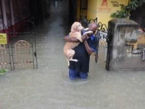 Tamil Nadu Rains: Fresh Rainfall Disrupts Life In Chennai
