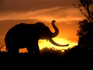Forest Watcher Beaten To Death For Stopping People From Exhibiting Maimed Elephant