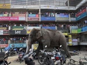 Rampaging Elephant In Siliguri Damages Over 40 Houses, Cars In 7 Hours