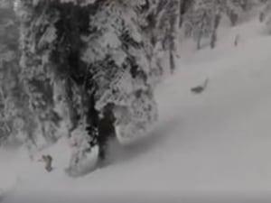 WATCH: Australian Skier Gets Chased By A Snow Leopard In Kashmir