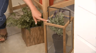 Growing Herbs for Kitchen Decor