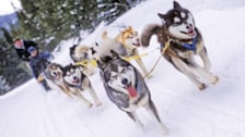 Dogsledding with Good Times Adventures