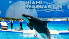 Miami Seaquarium