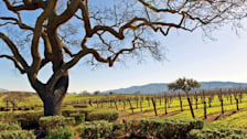 Santa Ynez Valley Wine Country