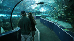 Ripley's Aquarium - Myrtle Beach, South Carolina