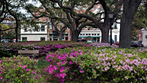 Savannah Flowers