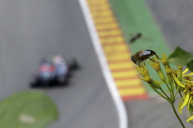 Belgium F1 GP Auto Racing (A bee is seen on the top of a flower as a Red Bull car is on track in background during the second fr