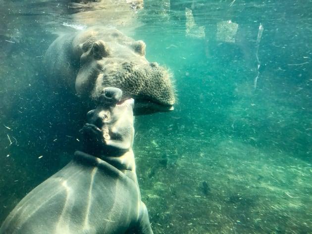 Cincinnati Zoo                    Kisses for mum