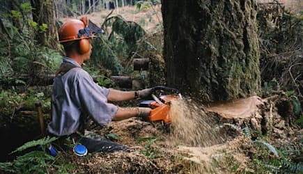 ||environmental concerns, color, horizontal, motion, exterior, outside, day, sunny, center, environment, logging, logger, person