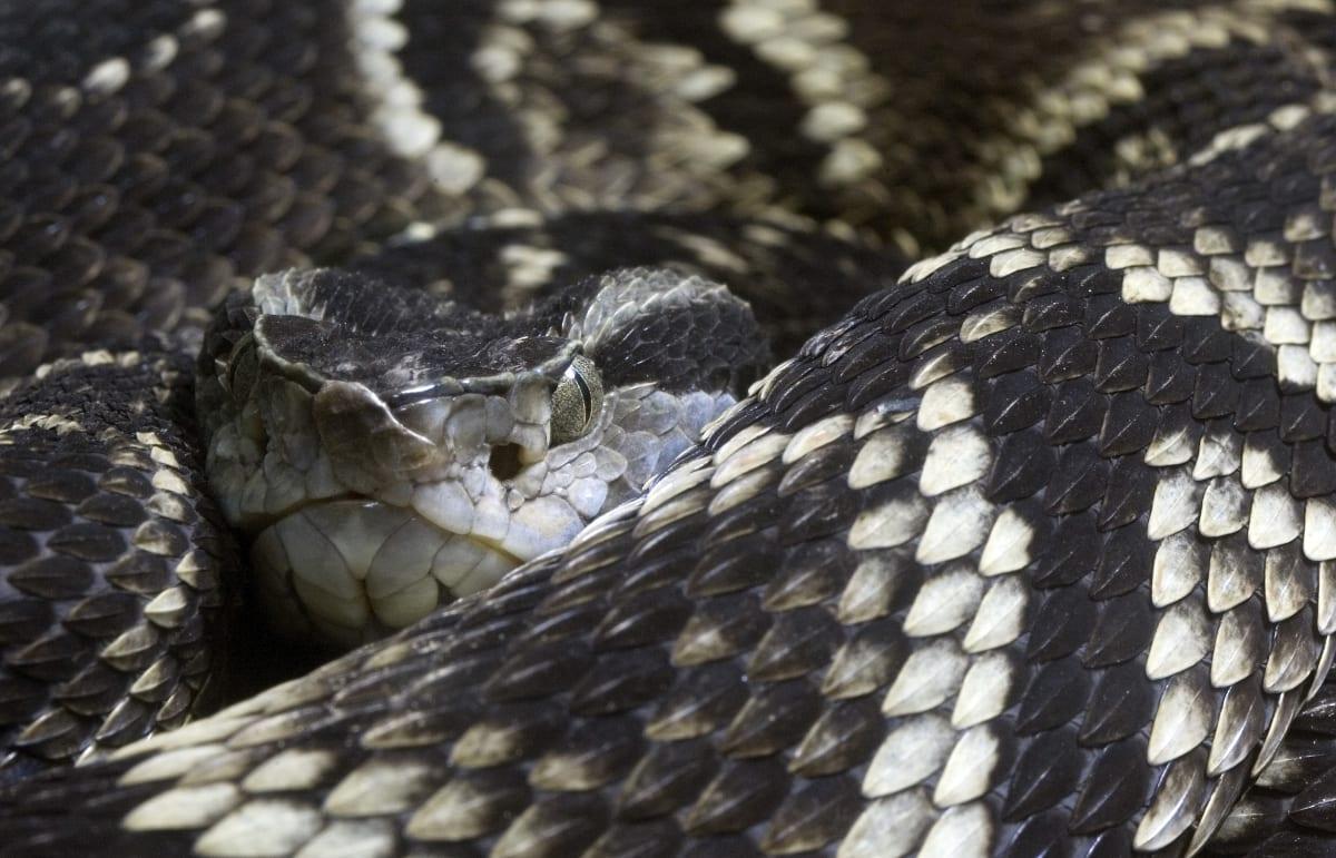 Brazil Snakes