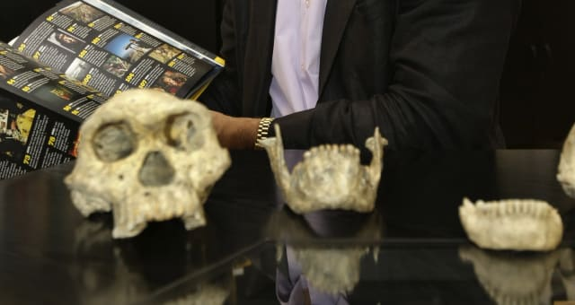 Early Human (In this photo taken Oct. 2, 2013, David Lordkipanidze, director of the Georgia National Museum, displays the ancien