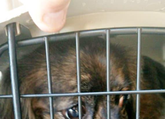 Paralyzed dog left at shelter with saddest note