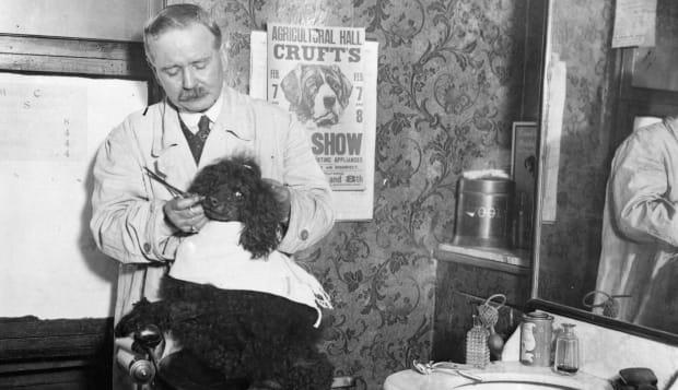 Dog's Haircut