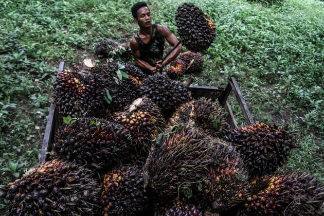 Allarme unicef in indonesia ci sono 5 milioni di bambini for Piccole piantagioni