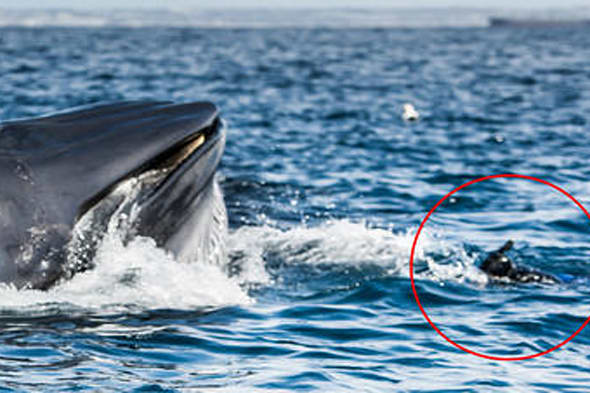 Whale under boat: Amazing pictures of moment giant 50-tonne mammal ...