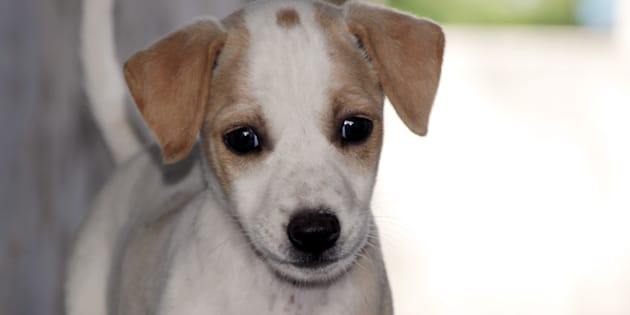 Man chopps off puppy's legs in Dwarka
