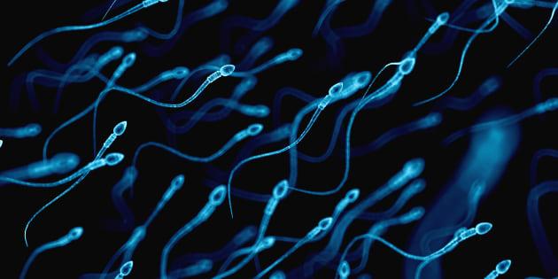 Un gel contraceptif injecté pourrait remplacer la vasectomie — Santé